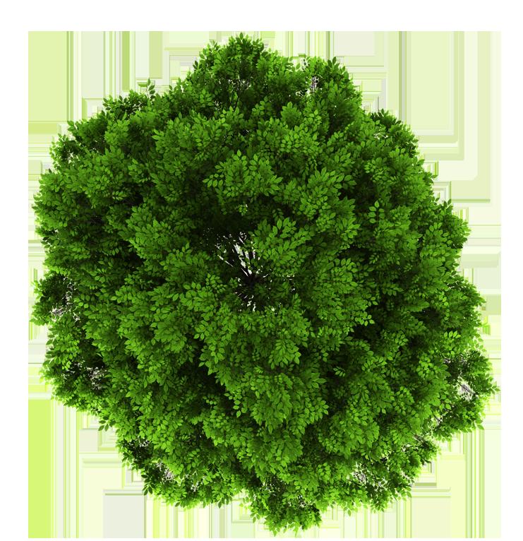 Grün Pinsa